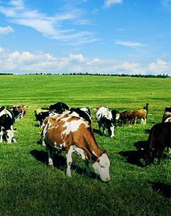 奶牛微生态