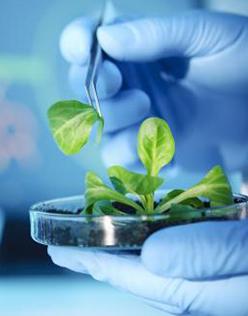 生物发酵料
