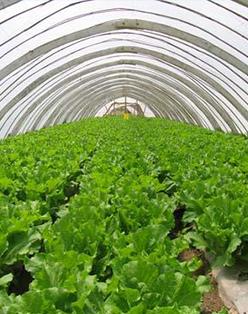 农业微生态